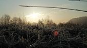 Přízemní mrazík 2012